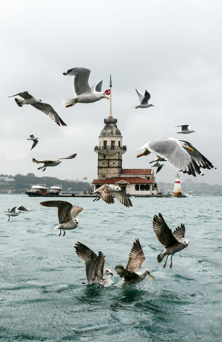 acrobatic gulls by Yaşar Koç on 500px