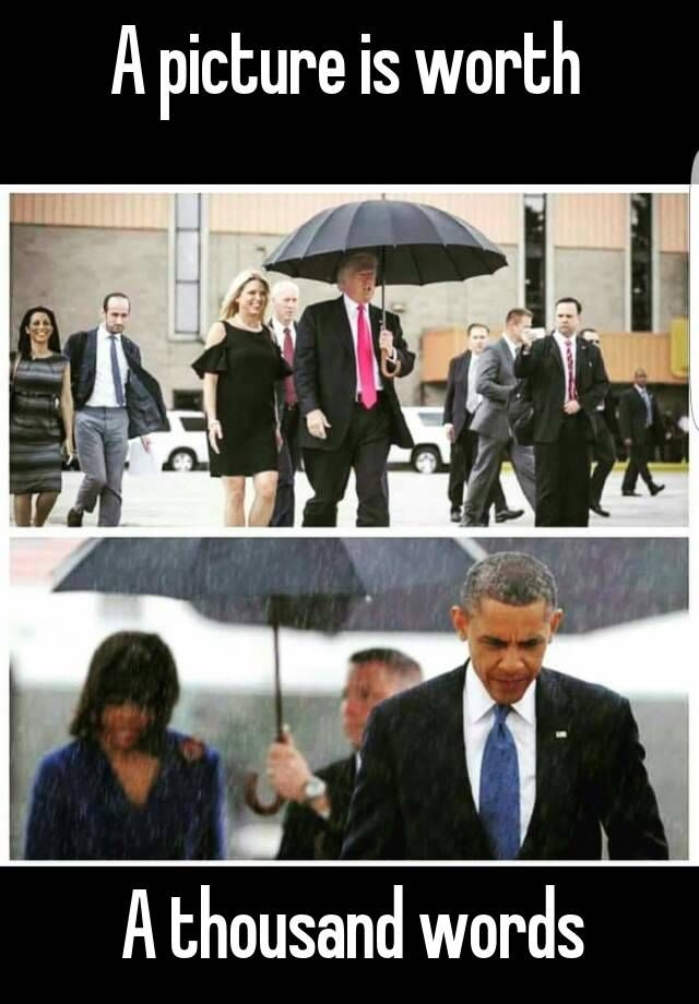 A picture is worth A thousand words | Funny quotes ...