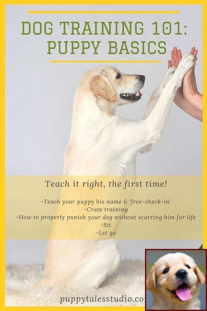House Training A Puppy And Dog Training Courses In Kerala Dog