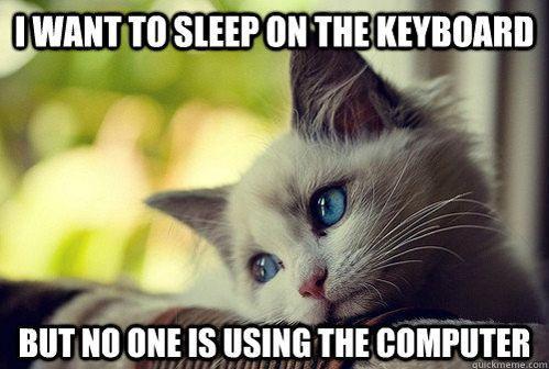 First world kitty problems.