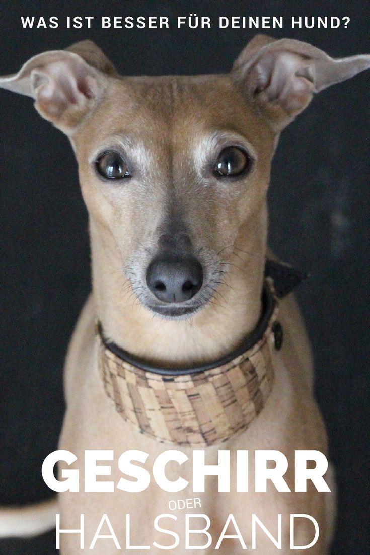 Halsband oder Geschirr - was ist besser für Deinen Hund? Und warum?