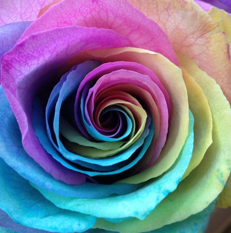 398 Best Images About Roses For My Brother On Pinterest