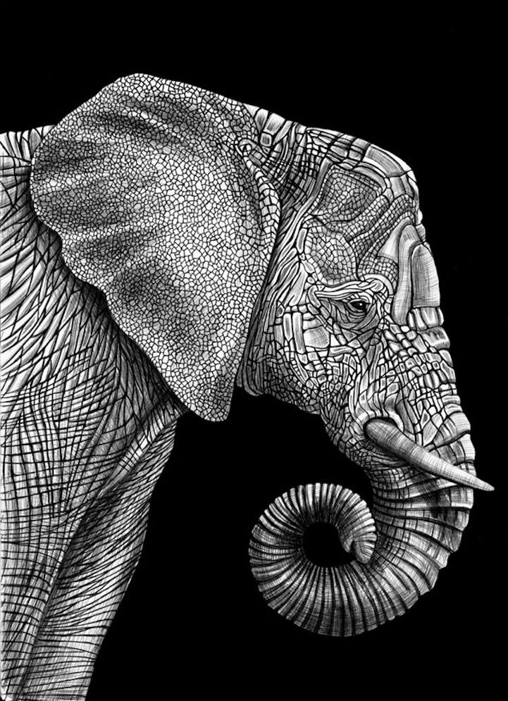 New Jersey-based illustrator Tim Jeffs has spent the past year trying to draw intricately detailed animal portraits with nothing more than pens and ink. Originally completing the spectacular sketchbook drawings as a pastime, Jeffs' son Harrison decided to share his dad's meticulous craft on reddit.
