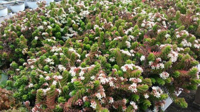 Mucho más en Jardín Mykonos...Olmue