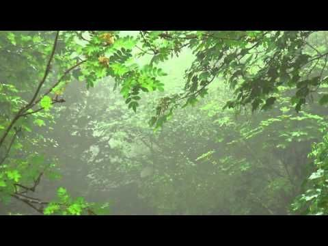 GUIDED Sleep Talk Down to Rain Sounds. Deepest Relaxation to Nature Sounds - YouTube   50 mix videos