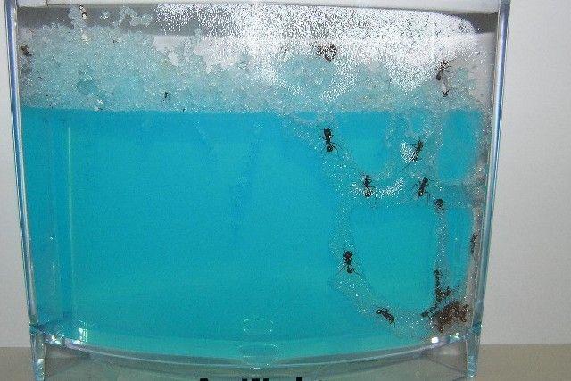 M s de 1000 ideas sobre remedios contra hormigas en - Que hacer contra las cucarachas ...