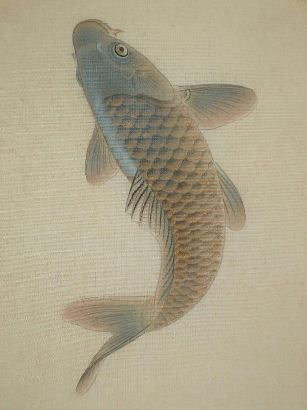 71 best reference japanese koi images on pinterest for Koi fish japanese art