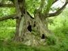 """Туристически информационен център към Община Стара Загора и Туристическо дружество """"Сърнена гора"""" маркираха подхода до Стария чинар и поставиха указателни и информационни табели до вековното дърво, което е на възраст 680 г. и се намира под закрилата на  закона. За всички, които искат да посетят природна забележителност в Стара Загора"""