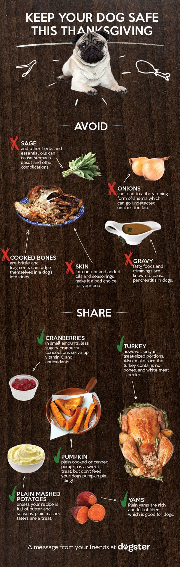 INFOGRAPHIC: Which Thanksgiving Foods Are Okay to Give Your Dog?| Animals & Pets, Dogs, Pet News, Thanksgiving - **Not my pug, but too important not to share!**
