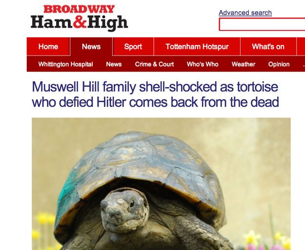 When this Nazi-defying tortoise came back from the dead.