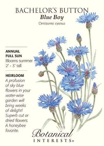 Annual. In addition to the dazzling sky blue flowers, Bachelor's Button Blue Boy (also known as cornflower) is also drought tolerant. Flowers can be used dried or fresh cut, while the edible petals ma