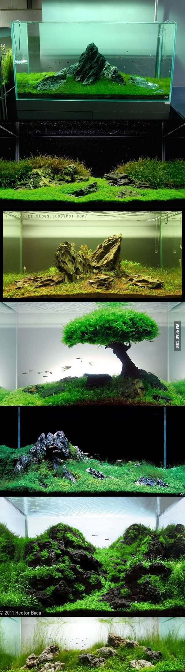 Minimalist Iwagumi method aquariums