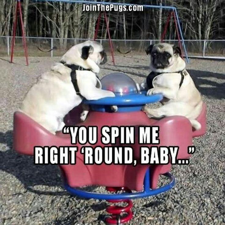 🎤 #Pugs love '80's #music! 🎤 ・・・ www.jointhepugs.com ・・・ #pugpower #pugsnotdrugs #pugpuppy #puglove #cuteness #pugoftheday #puglover #pugnation #dogstagram #dogsofinstagram #puppyeyes #pugstagram #pugworld #pugplanet #dogsofinstaworld #petstagram #instadog #instapug #babypug #pugsofig #pugsforever