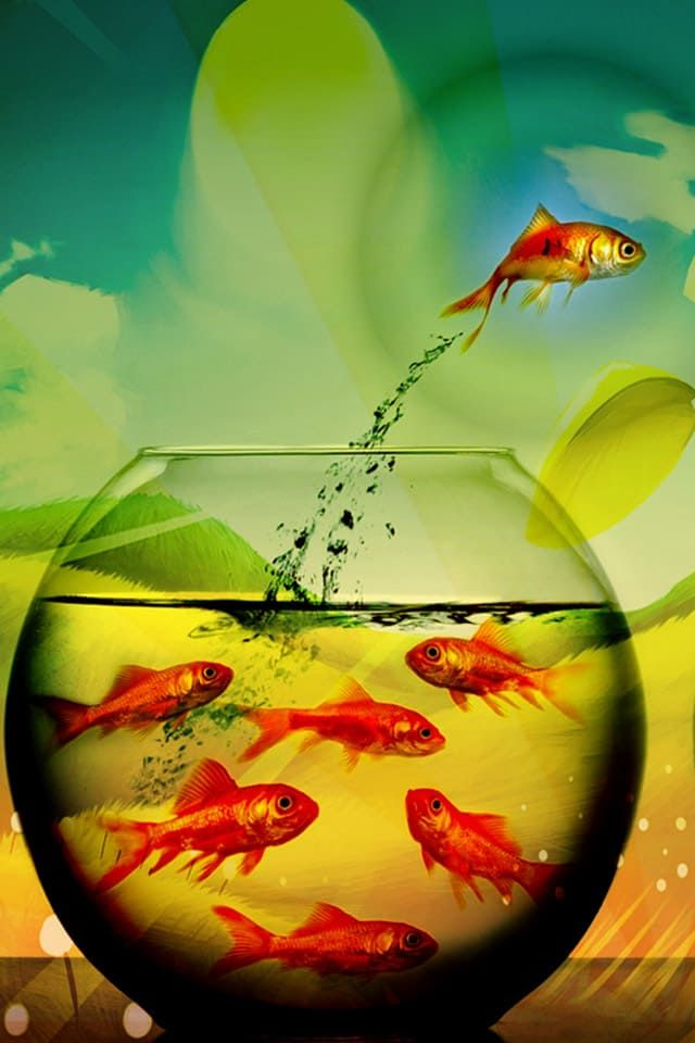 Http Mobw Org 20118 Iphone 6s Fish Wallpaper Mobile Html Iphone 6s Fish Wallpaper Mobile Arte Flipante Fantasia