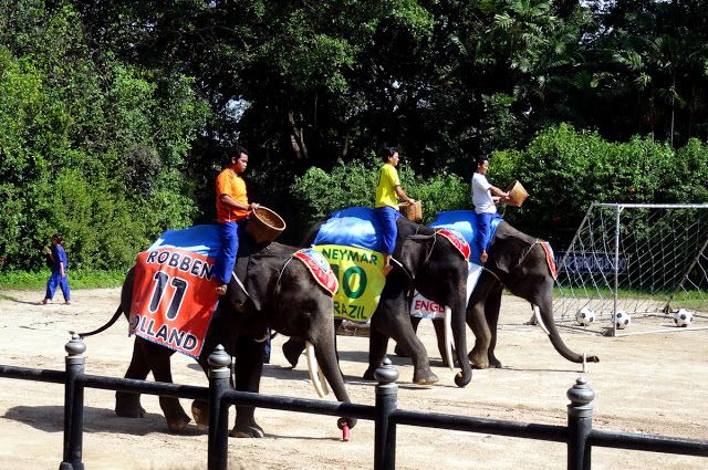 "Travel and Lifestyle Diaries Blog: Thailand: Part One of the Elephant Show – ""Elephant World Cup"" (2015) and some Magic"