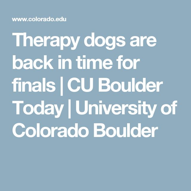 Therapy dogs are back in time for finals | CU Boulder Today | University of Colorado Boulder