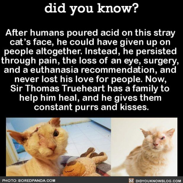 This is super sweet! I'm so glad that there is someone who cares about the animals out in the world! :) Even though they might not be a beautiful show dog or cat that doesn't mean they don't deserve loving.