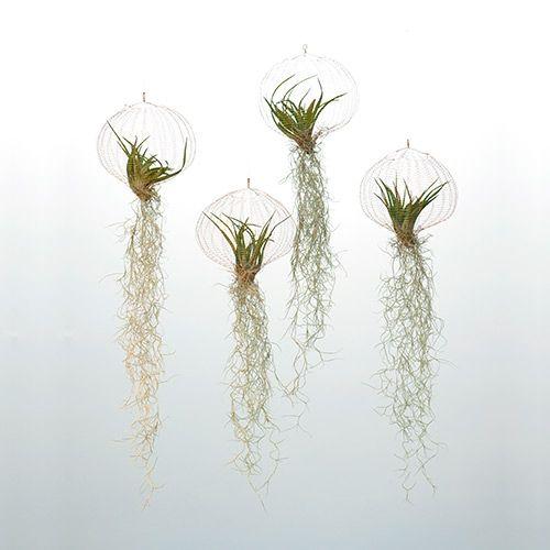 Air Plants er designet af den hollandske designer og indretningsarkitekt, Carolijn Slottje. Det er hængende planteholdere i kobbertråd, med tilhørende planter. Planterne til Air Plantning dyrkes fra frø i Mellemamerika og modnes i Holland.