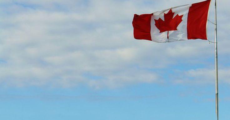 Árboles de arce rojo en Canadá. Para ver cuánto valoran los canadienses el árbol de arce, sólo tienes que mirar la bandera nacional. La hoja de arce no se incorporó en la bandera nacional hasta mediados del siglo XX, sin embargo la idea de utilizar una hoja de arce como símbolo cultural se remonta a la década de 1800. Aunque no es una réplica exacta de una hoja de arce, el ...