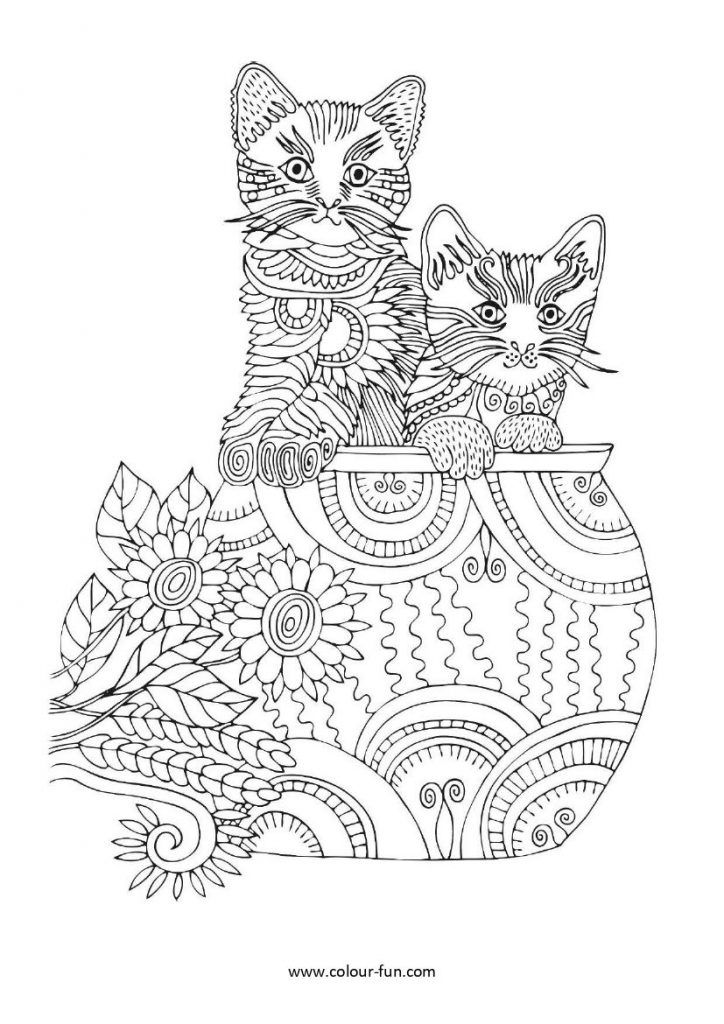 Animals Cats Colour Fun Adult Color Images Dog Cat