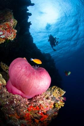 Fiji Honeymoon – All Inclusive Guide to the Perfect Honeymoon in Fiji