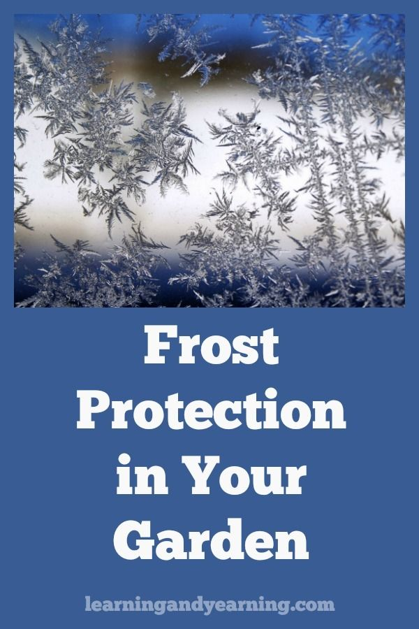 Frost Protection For Plants In Your Vegetable Garden 400 x 300