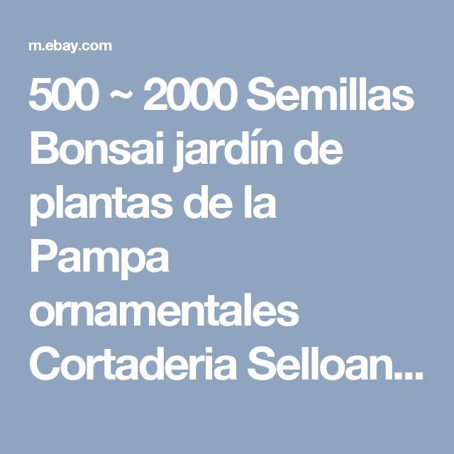 500 ~ 2000 Semillas Bonsai jardín de plantas de la Pampa ornamentales Cortaderia Selloana Hierba   eBay