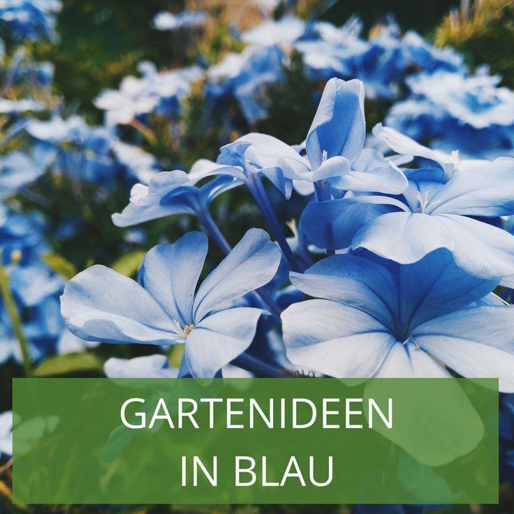 57 besten Gartenideen in Blau: Blaue Blumenbeete Bilder auf ...