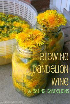 Brewing Dandelion Wine & Eating Dandelions - CreativeSimpleLife.com