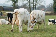 Startpagina over melkvee, melken, economie, diergezondheid, veefokkerij, huisvesting, voer en mechanisatie. Uitgebreid weerbericht, video's, agenda, blogs en polls.
