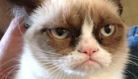 The truth about Grumpy cat (real name Tardar Sauce)
