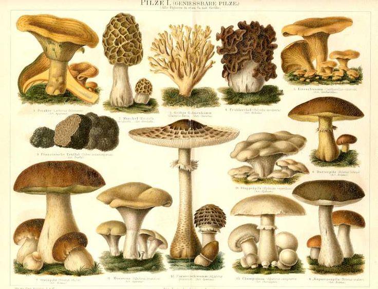 456 best images about hnd mycologie on pinterest. Black Bedroom Furniture Sets. Home Design Ideas