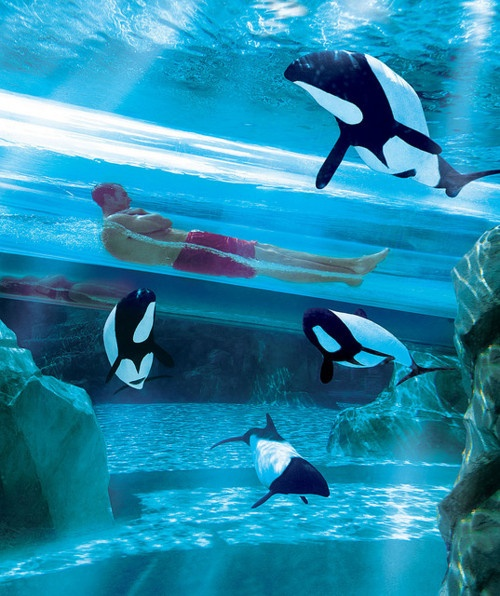 The Dolphin Plunge, Sea World, Orlando, Florida