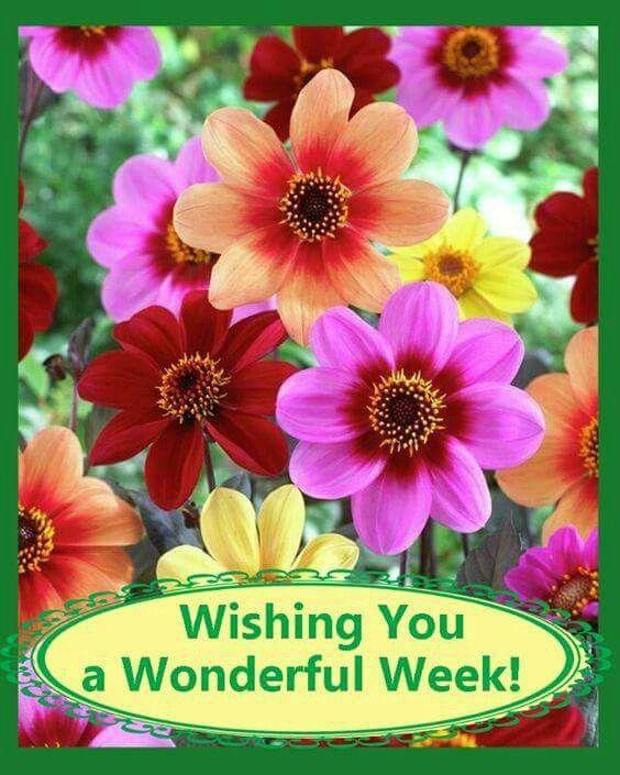 Image result for beautiful week flowers