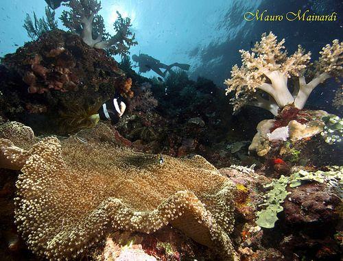 Z 1234B - Panorama de recife de corais.