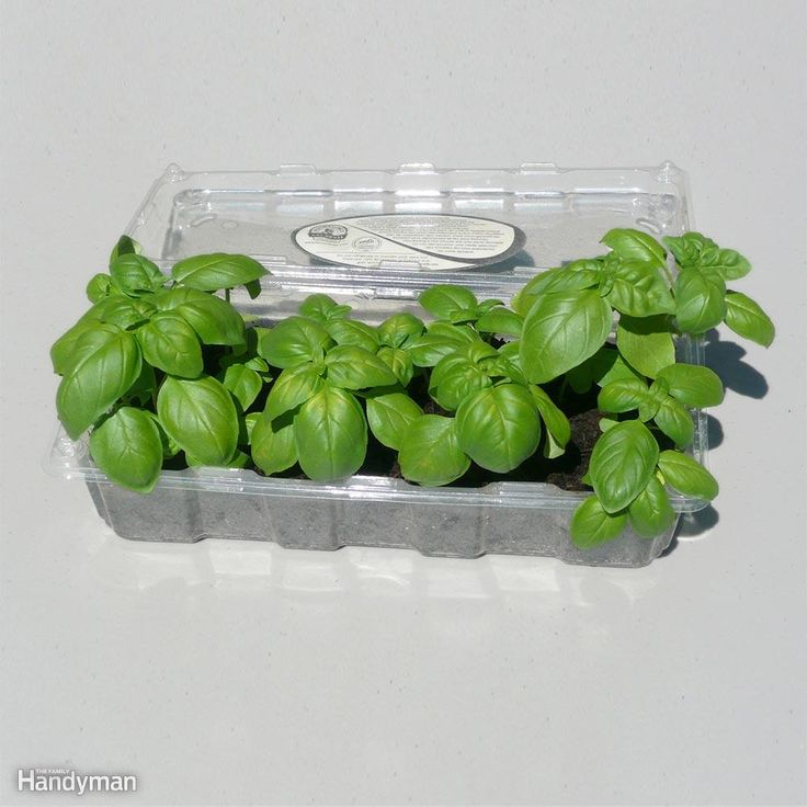 If you like to grow plants from seed, here's a great use for the clear plastic containers tomatoes and other produce come in. Make them into mini greenhouses! The containers have holes for air and drainage, so all you need to do is add soil and plant the seeds. When the seedlings grow tall, leave the lid open until it's time to transplant them into the garden. You can reuse the containers year after year.