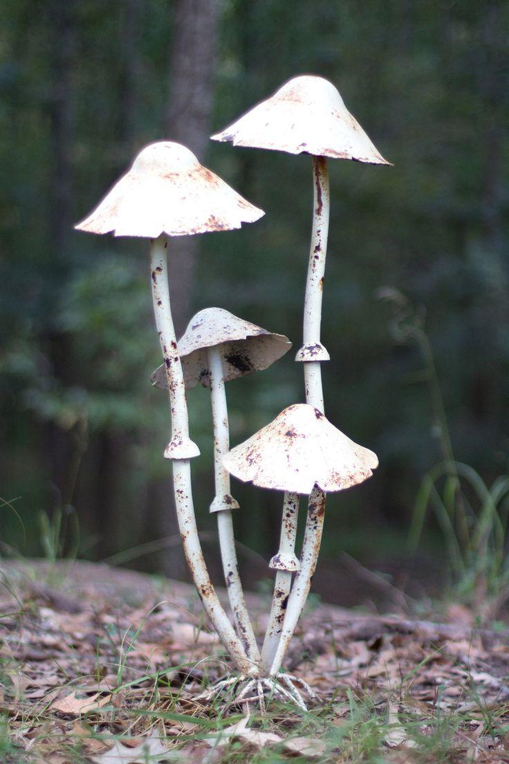 13 best mushrooms images on pinterest mushrooms fungi and