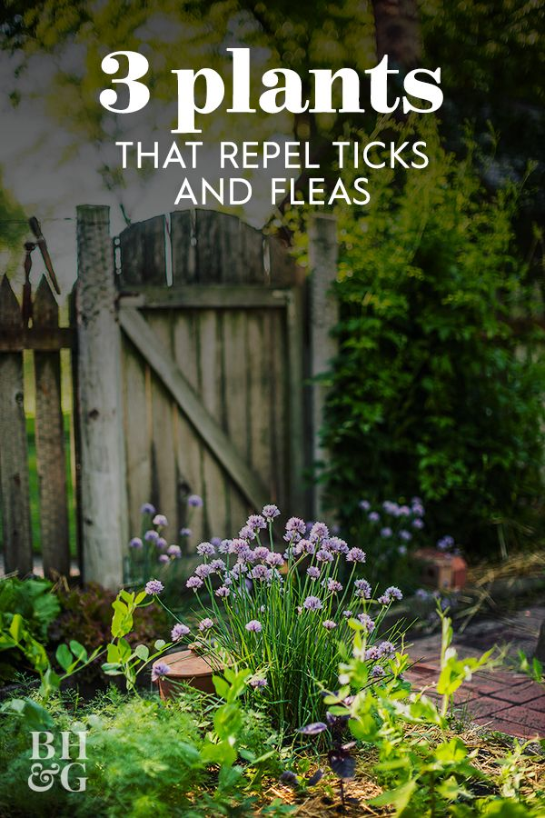 17b8ecea6d441b92d9a15e6a9f86adf6 - How To Get Fleas And Ticks Out Of Your Yard