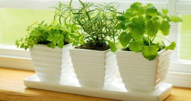 Kaktus Kaktus se na první pohled nejeví, že by to měla být rostlina přitahující pozitivní energii, ale skutečně to dokáže. Kromě toho…