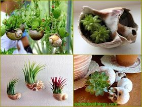 Awesome Nature: Seashells Planters