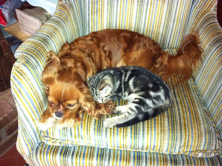 Pin by Hannah Jarvis on Awwwww Animals, Cats, Cozy