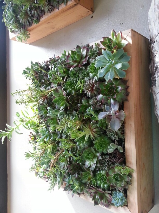 Succulent Wall Mount