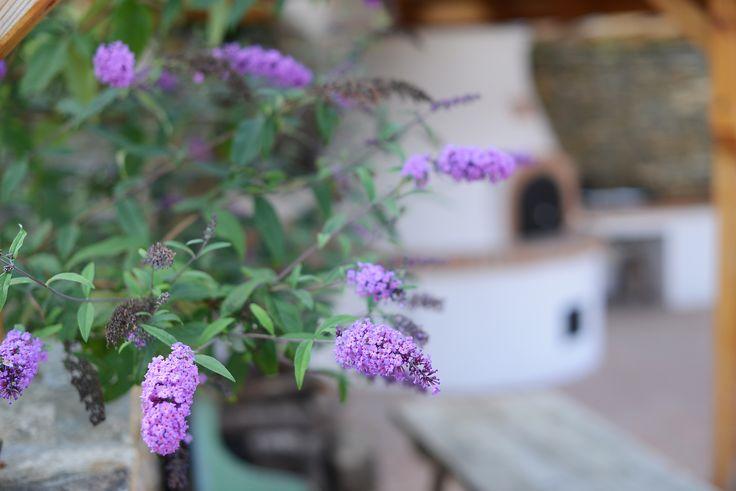 Kemence Lugas / Oven Garden #vintage #garden #placetostay #lilac