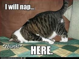 How I feel some days when I get home from work.