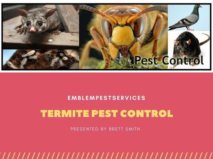 Termite control Penrith or termite treatment is completely designed to get rid of termites which are either free or have infested the objects. The termicide should not be used unless and until there is a definite need. The experts suggest the use of termicides at places where the need has been identified. Visit:http://emblempestservices.com.au/.