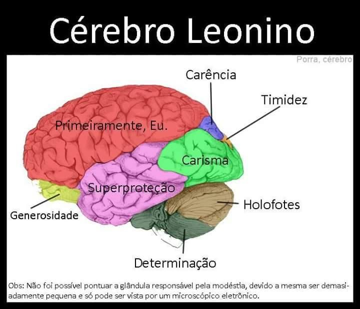 Ilustrações mostram como seria o (provável) cérebro de cada signo