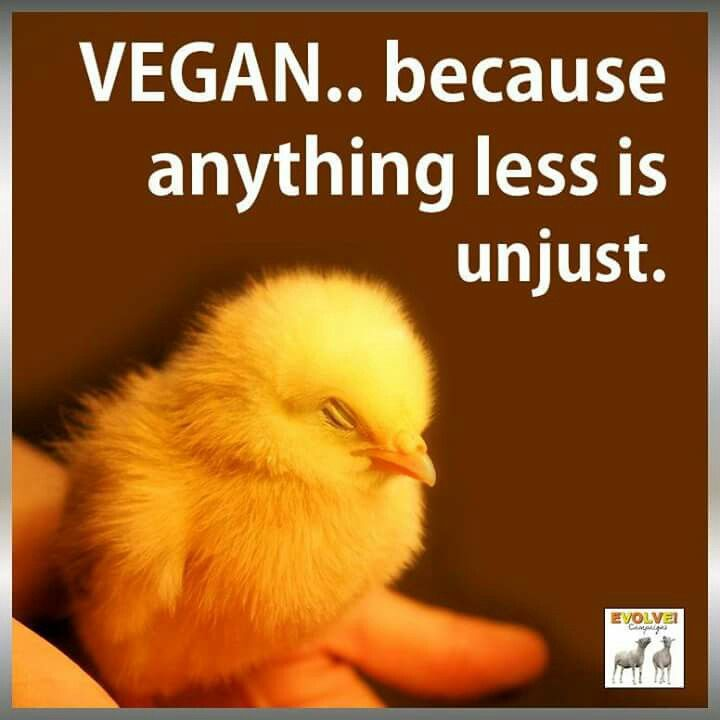 #vegan because anything less is unjust