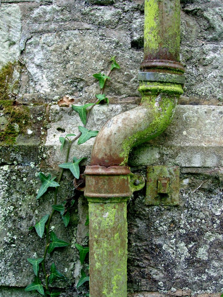 This image shows growth through the color green and through ivy plant growing. Additionally it shows decay from the moss and rust on the water pipe. I like this photo as it is simply but shows textures and colors.
