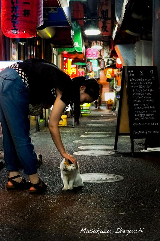 street cat in Tokyo. Photo by Masakazu Ikeguchi @東京猫色