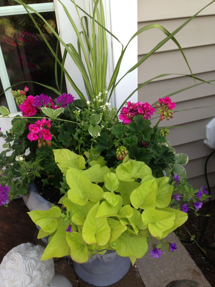 Gorgeous Geraniums A Collection Of Ideas To Try About